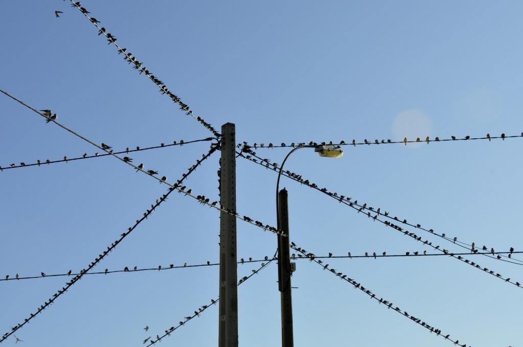 Títol: Una línia és una successió contínua d'ocells Autor: Marta Mecón Romero Categoria: 1r cicle ESO Any: 2012  (accèssit) Centre: Institut Joan Boscà (Barcelona)