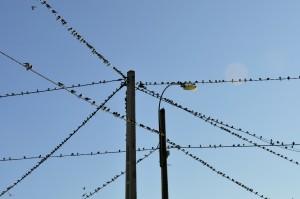 Una línia és una successió contínua d'ocells