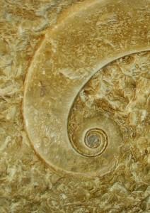 El sis fossilitzat