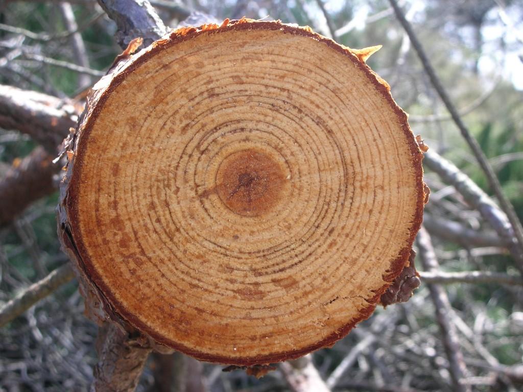 Títol: Traçat anual d'un compàs vegetal Autor: Marina Planelles Orozco Categoria: Batxillerat i ESPO Any: 2010 (accèssit) Centre: IES Montserrat