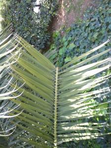 El valor absolut de les plantes