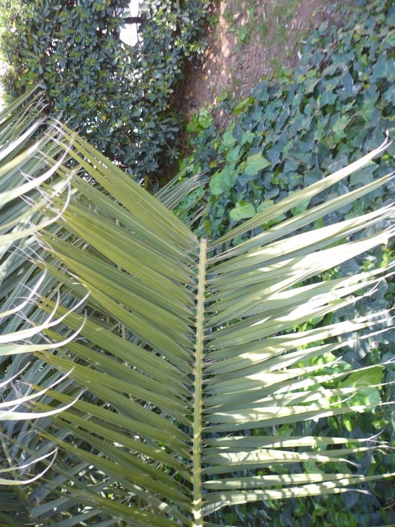 Títol: El valor absolut de les plantes Autor: Gemma Pidelaserra Categoria: Batxillerat i ESPO Any: 2010 (accèssit) Centre: Institut Castellbisbal