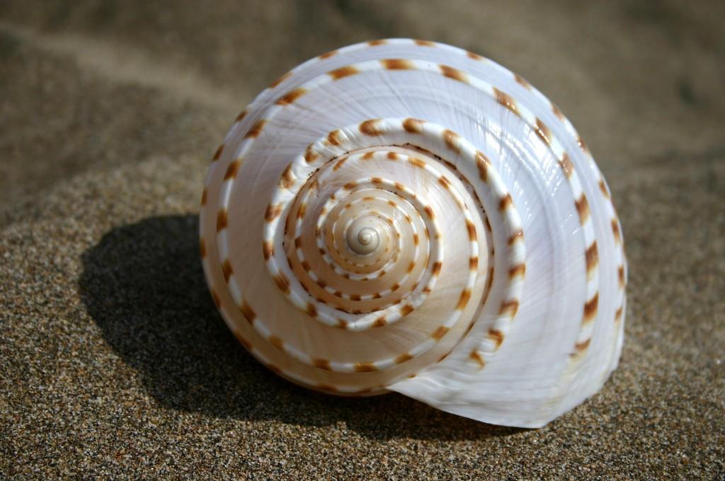 Títol: Espiral d'or logarítmica Autor: Antònia Guijosa Categoria: Professorat Any: 2010 (accèssit) Centre: INS de Lliçà