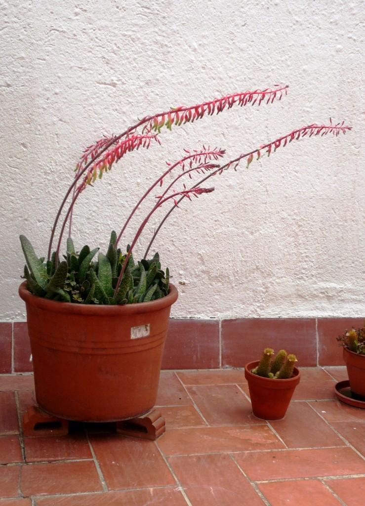 Títol: La força logarítmica del sol Autor: Rosa Maria Bachs Fornt Categoria: Professorat Any: 2014 (accèssit) Centre: Institut Emperador Carles (Barcelona)