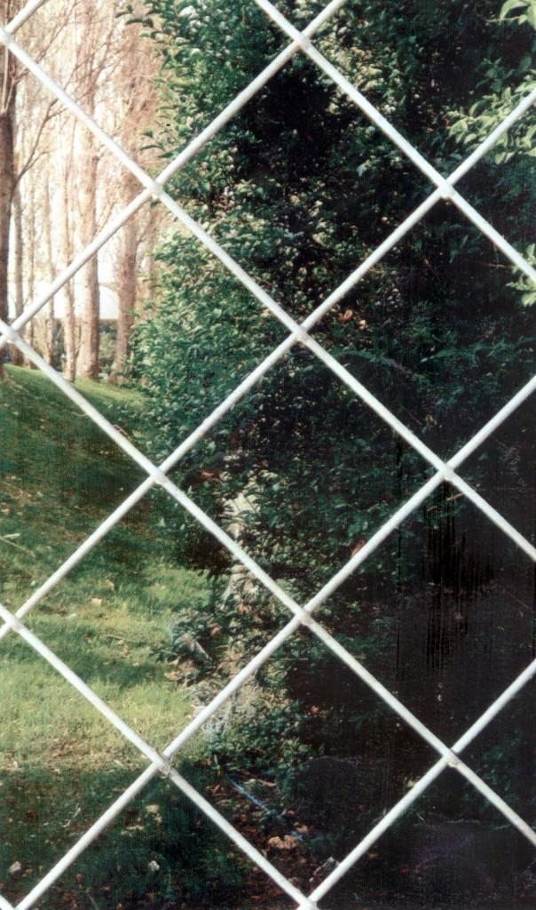 Títol: Natura quadriculada Autor: Michelle Bertran Montero Categoria: Primària (accèssit) Any: 2006 Centre: CEIP Turó Blau