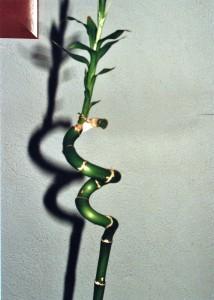 Un espiral amb vida pròpia