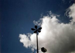 La flor de ferro pentagonal intenta tocar els núvols