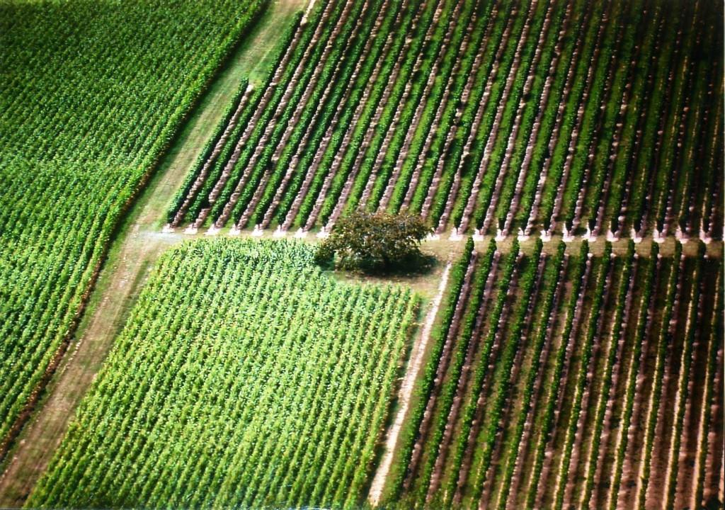 Títol: Paral•leles en l'agricultura Autor: Núria Muntadas i Casanova Categoria: Professorat Any: 2005 (accèssit)  Centre: IES Lliçà