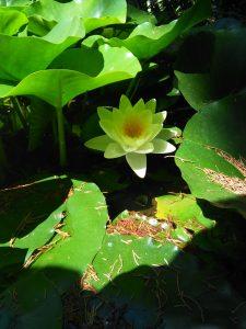 Flor, pètals, or, nombre
