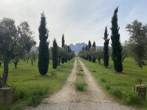 Camins paral·lels, arbres simètrics